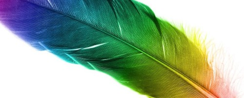 Brightly-coloured-Quill-pen-746x300